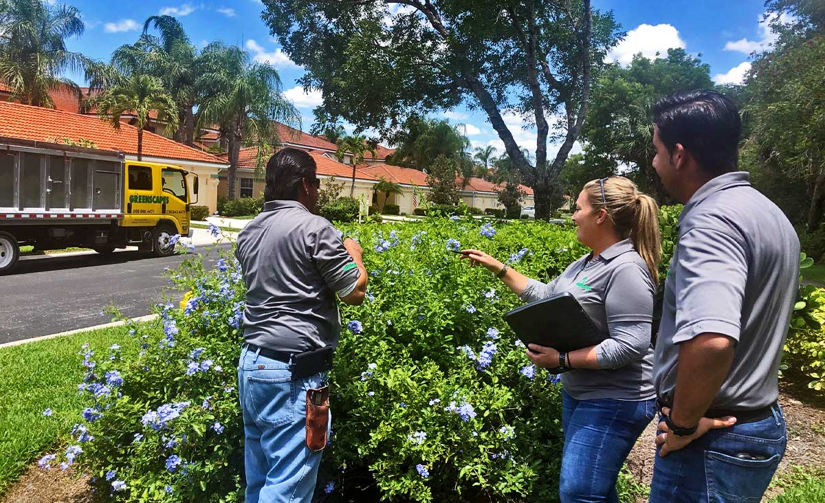 Discover Our Pest & Weed Control Service Difference | Greenscapes of Southwest Florida, Inc.