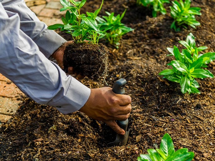 Enhancement Landscape Management Service | Greenscapes of Southwest Florida, Inc.