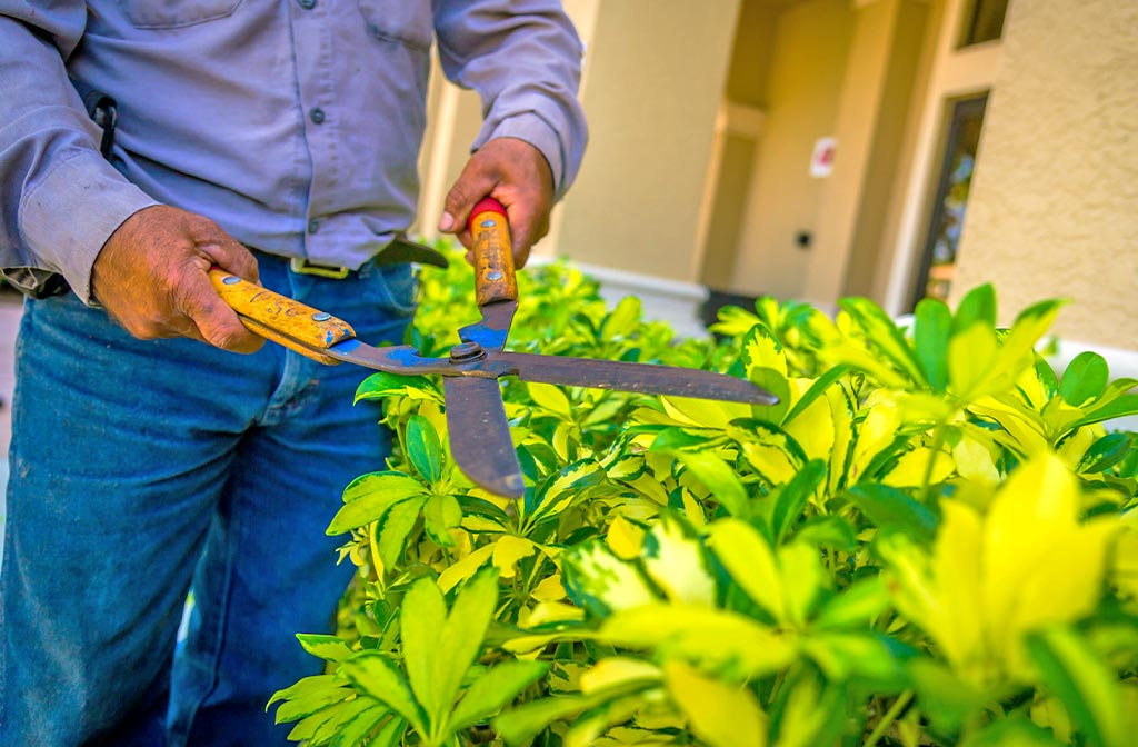 Ornamental Plant & Shrub Pruning | Greenscapes of Southwest Florida, Inc.