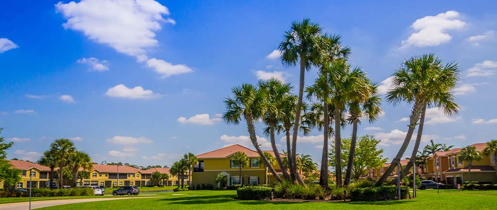 Palm Trimming Tree Service | Greenscapes of Southwest Florida, Inc.