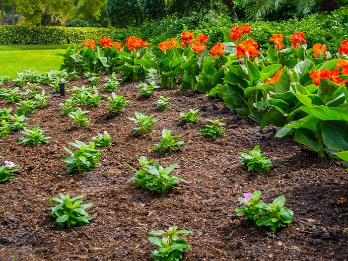 Pest & Weed Control Landscape Management Service | Greenscapes of Southwest Florida, Inc.