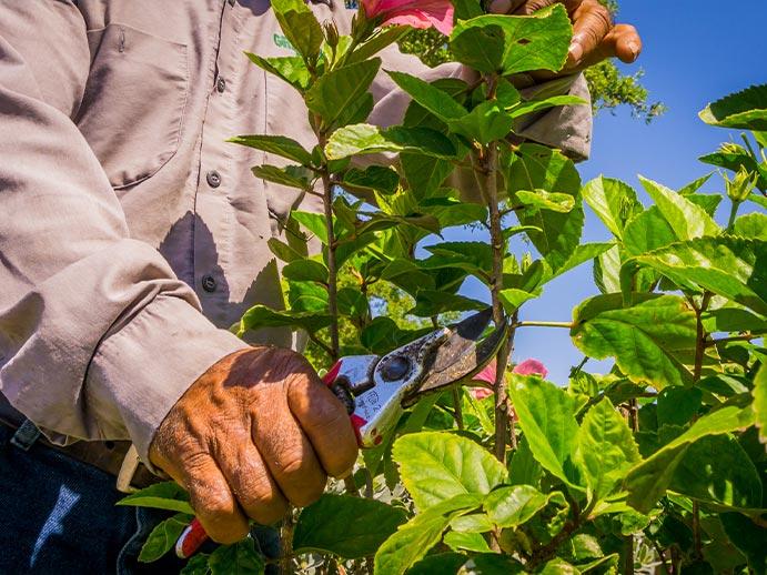 Pruning Landscape Management Service | Greenscapes of Southwest Florida, Inc.