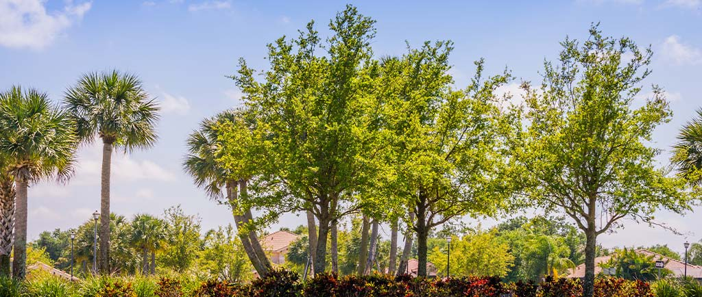 Trimming Tree Service | Greenscapes of Southwest Florida